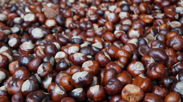 chestnut-1761700_1920